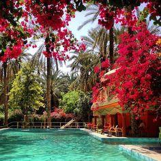Bougainvillea.Tozeur, Tunisia.