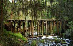 Phinizy Swamp Nature Park in Augusta, GA