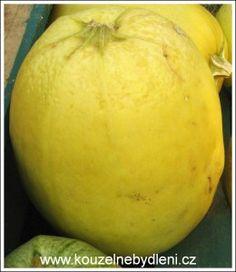 spagetova-dyne-a-recepty-na-jeji-pripravu Honeydew, Pear, Mango, Pumpkin, Fruit, Vegetables, Food, Manga, Pumpkins