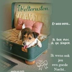 Good Night, Slaap Lekker, Anton, Fun, Dogs, Nighty Night, Pet Dogs, Doggies, Good Night Wishes