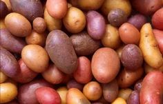 Potatoes for Dogs Go