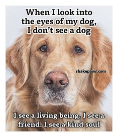 All Dogs, I Love Dogs, Puppy Love, Cute Dogs, Dogs And Puppies, Doggies, My Best Friend, Best Friends, Animals And Pets