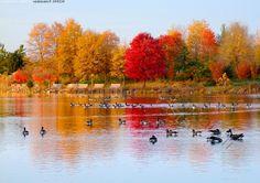 Värikäs syksy - syksy linnut järvi puu puita puistonpenkki vesi punainen keltainen oranssi ruskea lehdet Maryland Fall Art Projects, Endless Night, Autumn Art, Shades Of Red, Art Activities, Maryland, Finland, Amazing Art, Around The Worlds