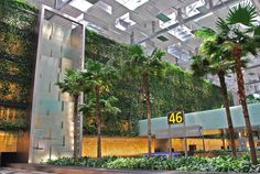 Singapore Changi Airport Terminal 3, Greenwall | Skyrise Greenery