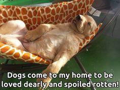Spoilt pup