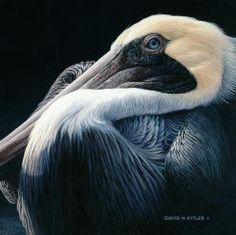 David Kitler canadian wildlife artist.... awesome artist! and teacher!