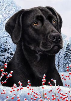 Black Labrador - TB Winter Berries Flags are made from 2 pieces of fabric sewn back to back to withstand even the most severe weather.Size: 28 x 40 inches. Black Labrador Retriever, Labrador Retrievers, Outdoor Flags, Indoor Outdoor, Custom Flags, Most Popular Dog Breeds, Winter Berries, Black Labs, Winter House
