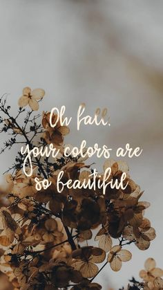 Oh otoño, tus colores son tan hermosos - wallpaper - Wallpaper Collage, Cute Fall Wallpaper, Free Iphone Wallpaper, Halloween Wallpaper, Trendy Wallpaper, Wallpaper S, Fall Wallpaper Tumblr, Halloween Backgrounds, Winter Wallpaper