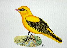 "Daily Paintworks - ""Eurasian Golden Oriole"" - Original Fine Art for Sale - © Ketki Fadnis"