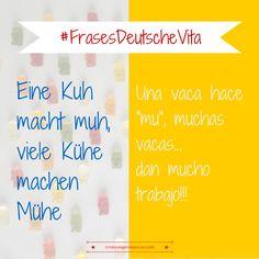 """Frases hechas""""en alemán #Deutsch #german #aleman > Eine Kuh macht muh, viele Kühe machen Mühe"""