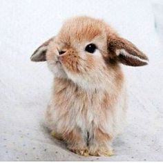 OMG!!!!!!!!!!!!!!!!!!!!!!!!!!!!!!!!!! This is so .......... Cute!!!!!!!!!!! This little bunny is giving me life.....!!!!!!!!!!!!!!!