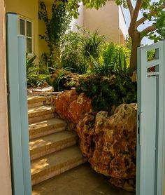גינה קטנה בעיר Small Gardens, Plants, Little Gardens, Plant, Planets