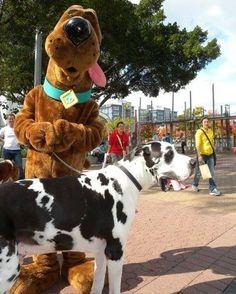 Scooby meets Scooby! Love it