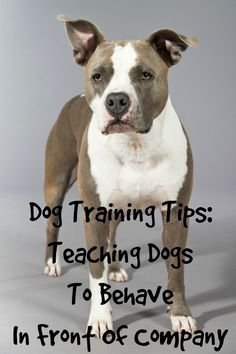 Dog Obedience Training Dog Training Tips: Teaching Dogs To Behave In Front Of Company: Dogs jumping on your friends or other inappropriate things? Check out these dog training tips to teach your pooch how to behave in front of company! Basic Dog Training, Training Your Puppy, Training Dogs, Potty Training, Training Classes, Agility Training, Training Schedule, Training Videos, Training Tips