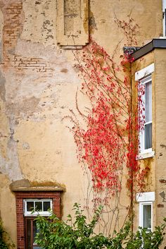 most people would say the see flowers but I see a long flame climbing the building of ruin, and yet it is so beautiful