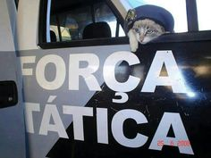 Police ○~○ ¤ Lovely Cats