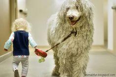 Komondor Dog With Baby Funny Pic