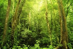 Green Fern Woodland Wallpaper Murals, custom made to suit your wall size by the UK's No.1 for murals. Custom design service and express delivery available.