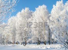 Зимний пейзаж с замерзшей дерево