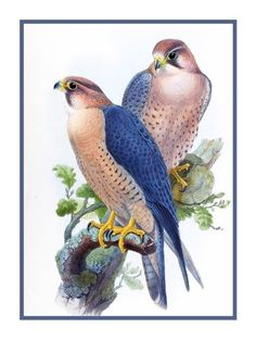Peregrine Falcon by Naturalist John Gould Birds Counted Cross Stitch or Counted Needlepoint Pattern