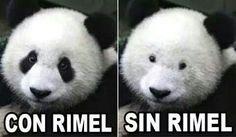 Gracioso el panda jejeje