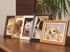 Poppet : des photos de votre animal de compagnie...en relief et impression 3D