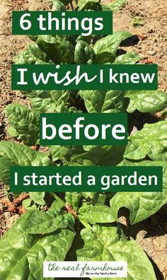 awesome Things I wish I knew before I started a garden More