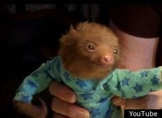 Baby Sloth in a onesie... want one!