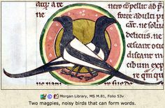 Image result for medieval magpie bird