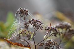 Spiders web, taken in my garden, south- east London