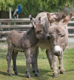 Wee donkeys