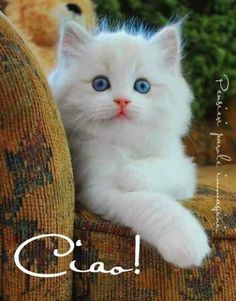 Cute Fluffy Kittens, Cute Puppies And Kittens, Cute Baby Cats, Cute Funny Animals, Cute Baby Animals, Kittens Cutest, Animals And Pets, Beautiful Kittens, Pretty Cats