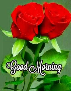 All kinds of pictures, articles, quotes, words to be shared on social networks … - Blumen Sweet Good Morning Images, Good Morning Friends Images, Good Morning Cards, Good Morning Photos, Good Morning Gif, Good Morning Greetings, Morning Pictures, Good Morning Flowers Rose, Good Morning Flowers Pictures