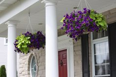 Purple Hanging baskets for frfont and back porch.