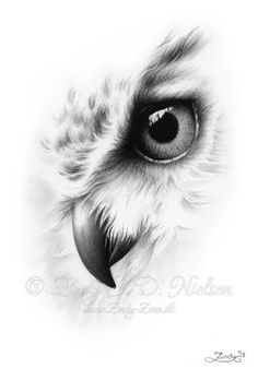 Faded Owl Portrait Animal Nature Bird Zindy Nielsen This is a beautiful print w. - Faded Owl Portrait Animal Nature Bird Zindy Nielsen This is a beautiful print with my drawing; Owl Tattoo Drawings, Bird Drawings, Pencil Art Drawings, Art Drawings Sketches, Tattoo Owl, Owl Tattoos, Fish Tattoos, Sleeve Tattoos, Anchor Tattoos