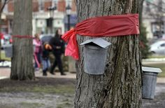This photo symbolized the solidarity of the town of Chardon, Ohio. The red ribbons tied around the trunks of maple trees. Every year, Chardon hold the Geauga County Maple Festival, and those cans are collecting sap to turn into maple syrup, maple candy and the Chardon Maple Stir.