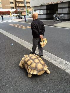 Homem mais paciente do mundo caminha com sua tartaruga gigante, todos os dias, pelas ruas de Tóquio