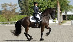 Jane Savoie-Excellent Dressage Coach