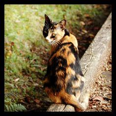 見返り美ニャン #cat #izu #japan  - @noel_izu- #webstagram
