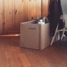 Boo  . . . #casperithecat #cats #instacat #catsofinstagram #whyareyoulikethis