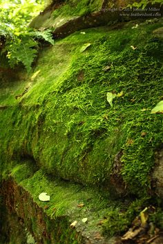 I am a moss junkie. Moss is SO exciting to me. I could flood a deluge of moss photography here but I will try to keep it in check. This moss is covering a group of large rocks (boulders if you will...