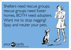 4) My News Years Resolution is to promote rescue, fostering and spay neuter. #GrandHomeFurnishings