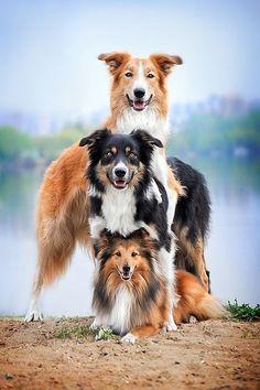 """heaven-ly-mind: """"Dog pyramid by Ksenia Raykova"""" Beautiful !!! \O/"""