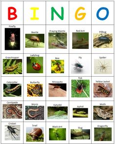 Bingo. Bug hunt. Insects.