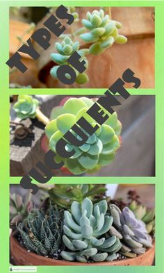 Types of Succulents; chubby, spikey, textured, smooth - New Site Types Of Houseplants, Landscaping Retaining Walls, Bountiful Garden, Little Plants, Garden Types, Drought Tolerant Plants, Plant Tags, Fairy Garden Diy, Types Of Succulents