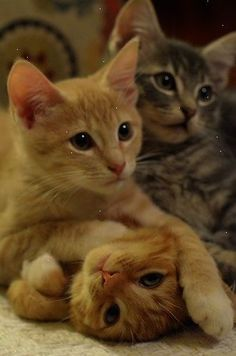 =..=Thanks Pinterest Pinners for stopping by viewing re-pinning & following my boards. Have a beautiful day! .. and Feel free to share on Pinterest .. ... #catsandme  #doghealthcareblog
