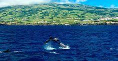- Dans l'archipel des Açores Trek sur les volcans et Seafari en snorkeling. Une nature luxuriante snorkeling d'exception et esprit pionner. - In the Azores archipelago Trek on volcanoes and Snorkeling Seafari. A lush nature exceptional Snorkeling and pioneer spirit. #sealadventures #açores #azores #seafari #snorkeling #lushnature #trek #trekking #volcans #volcanoes