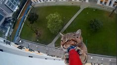 The dramatic moment a kitten is rescued from a 12th-storey ledge has been captured on camera
