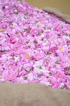 Roses from Grasse, Provence via Happy Interior Blog