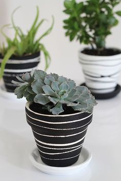 Black, white, & green. Potted plants get love in monochrome - using a paint and rubber bands!